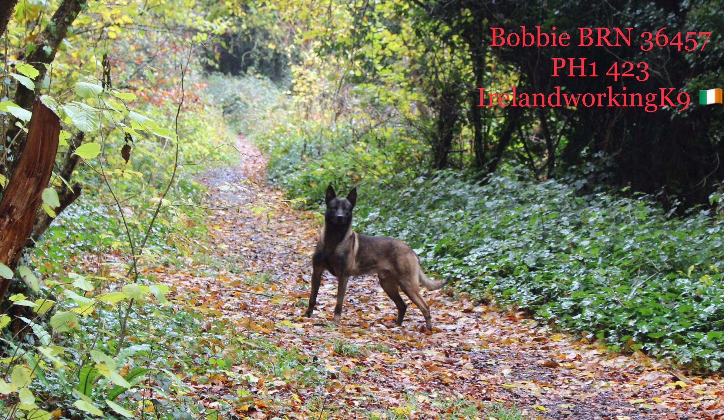 Bobbie PH1 423 BRN 36457